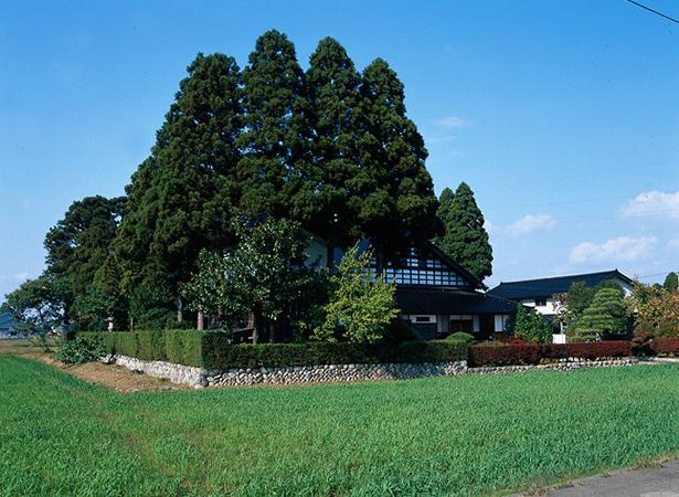 散居する民家と屋敷林